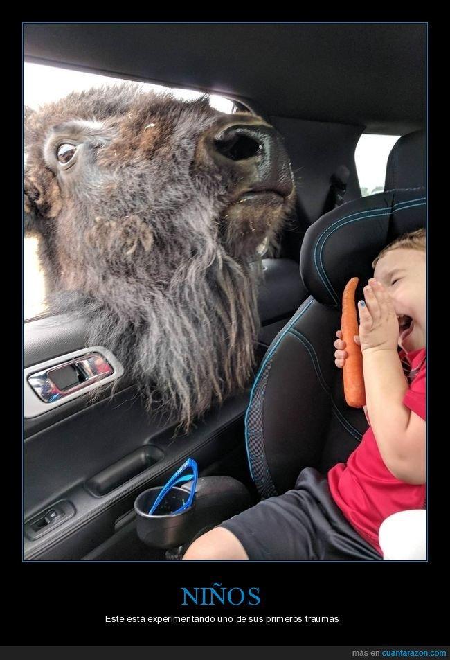 bisonte,coche,miedo,niño