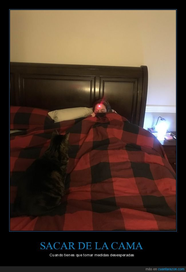 cama,gato,láser