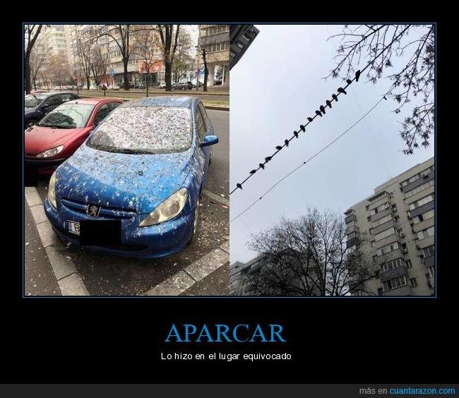 aparcamiento,cacas,coche,pájaros