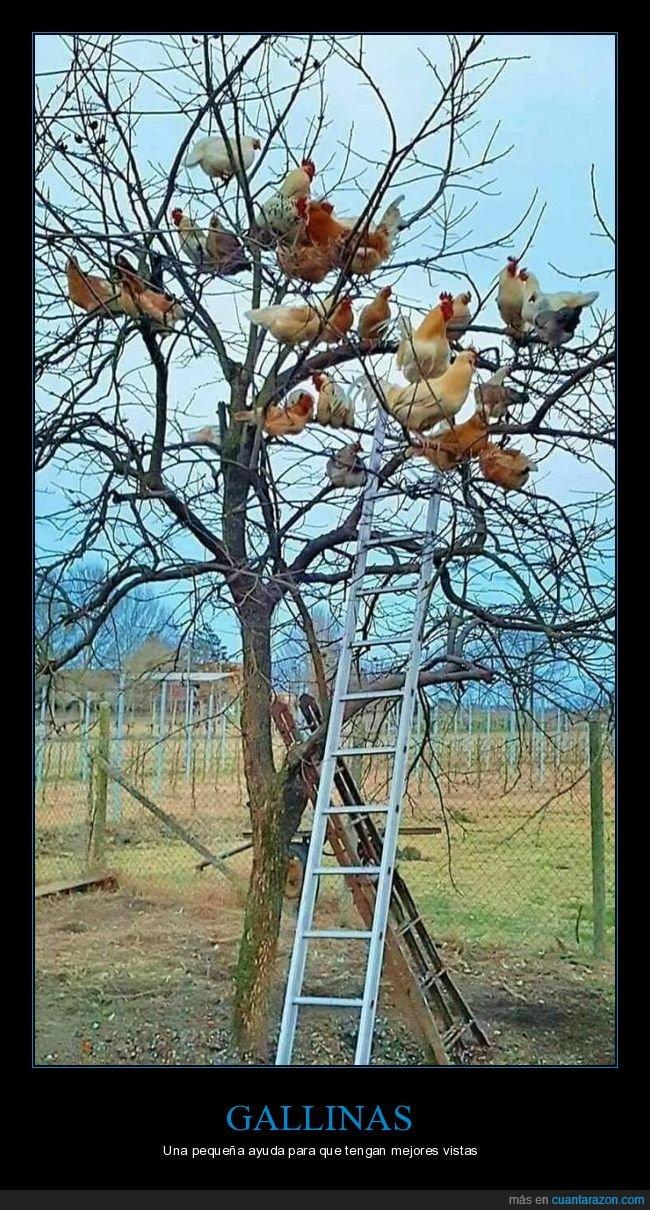 árbol,escalera,gallinas
