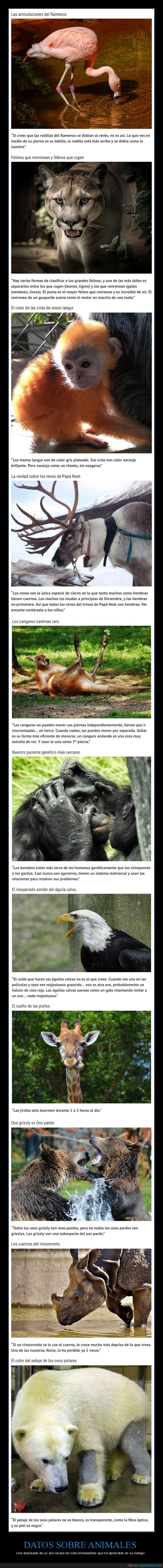 animales,curiosidades,datos,zoo