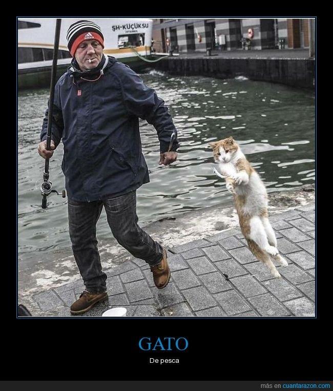 gatos,pescador,pez