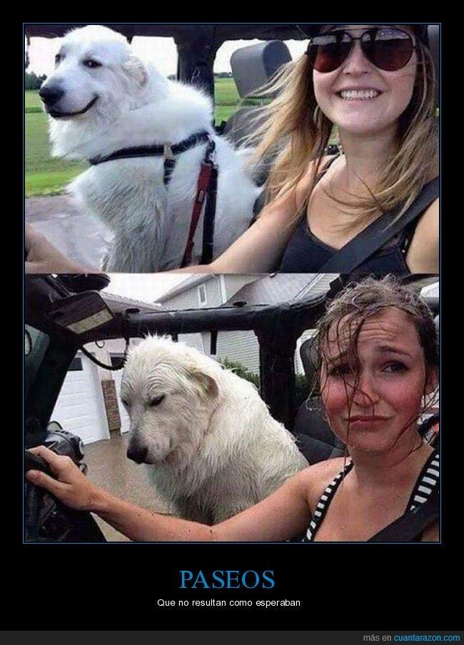 coche,fails,mojados,perro