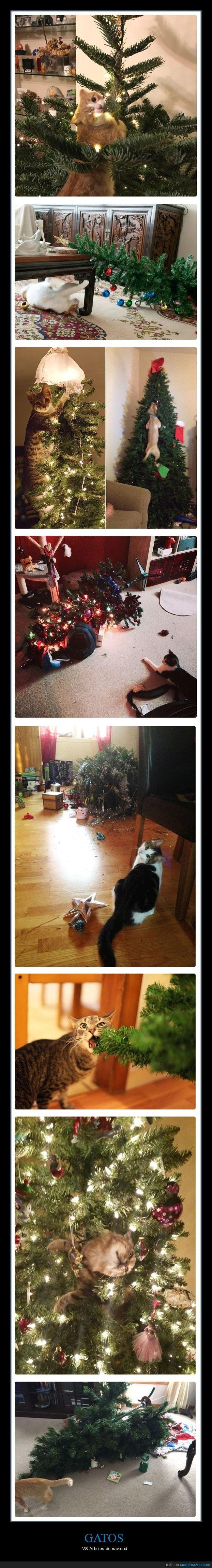 árboles de navidad,gatos,navidad