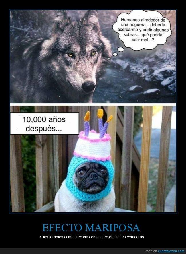 compañía,lobos,mascotas,perros