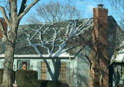 Enlace a Cuando la naturaleza decide decorar tu tejado