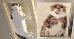 Enlace a Divertidas razones por las que los dueños de gatos deberían tener mesas de cristal
