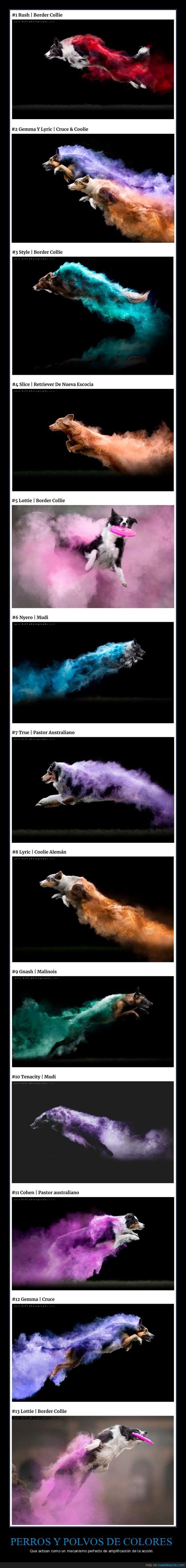 fotografía,perros,polvos de colores