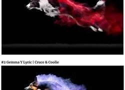 Enlace a Una fotógrafa arroja polvos de colores a unos perros y el resultado es increíble