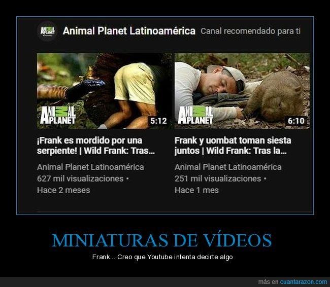 animales,culo,frank de la jungla,serpiente