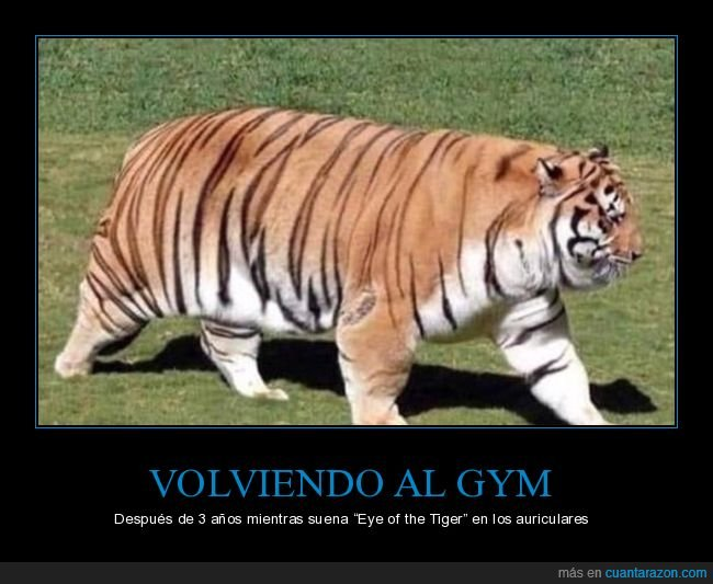eye of the tiger,gimnasio,gordo,tigre