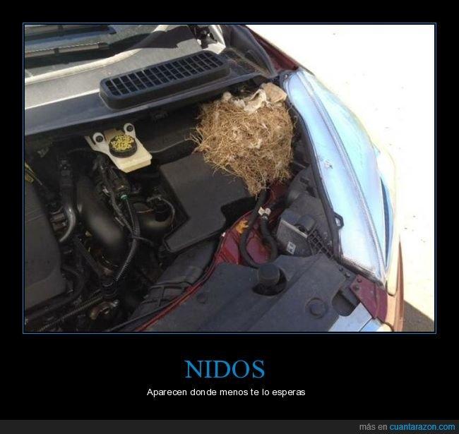 coche,nido
