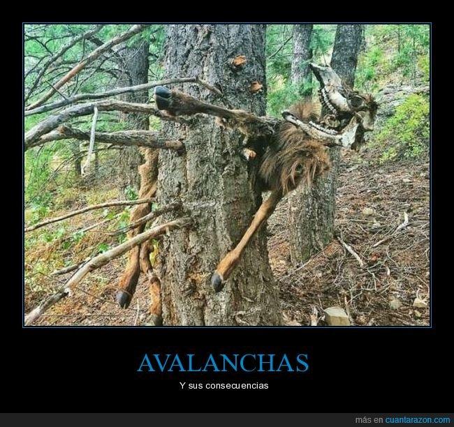 árbol,avalancha,cabra,muerta,wtf