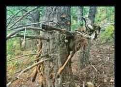 Enlace a Ir tranquilamente por el bosque y encontrarte esto: