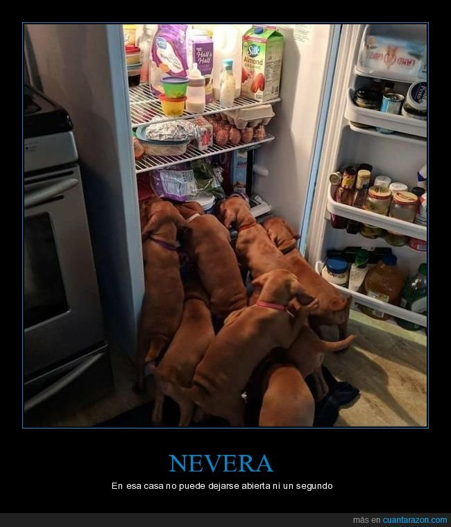 nevera,perros