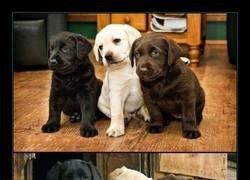 Enlace a Amigos desde siempre