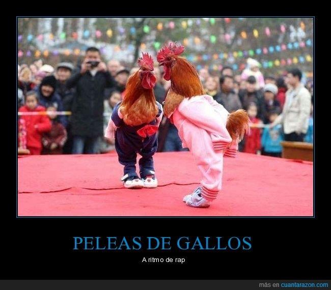 gallos,pelea de gallos,ropa,wtf