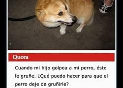 Enlace a La gente comparte consejos interesantes con una madre que pregunta cómo hacer que su perro deje de gruñir a su hijo cuando este le pega