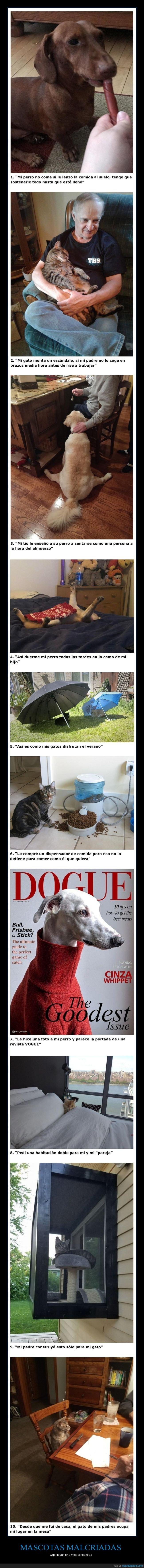 malcriados,mascotas