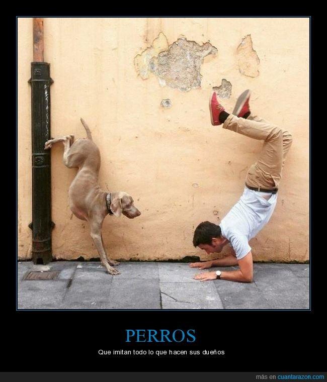 imitando,perro,postura