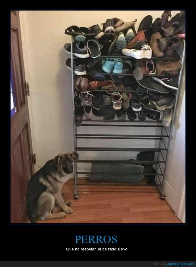 perros,zapatero,zapatos