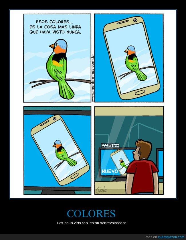 colores,escaparate,móvil,pájaro,televisión
