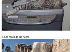 Enlace a Gatos relajados que se sienten como en casa en todas partes