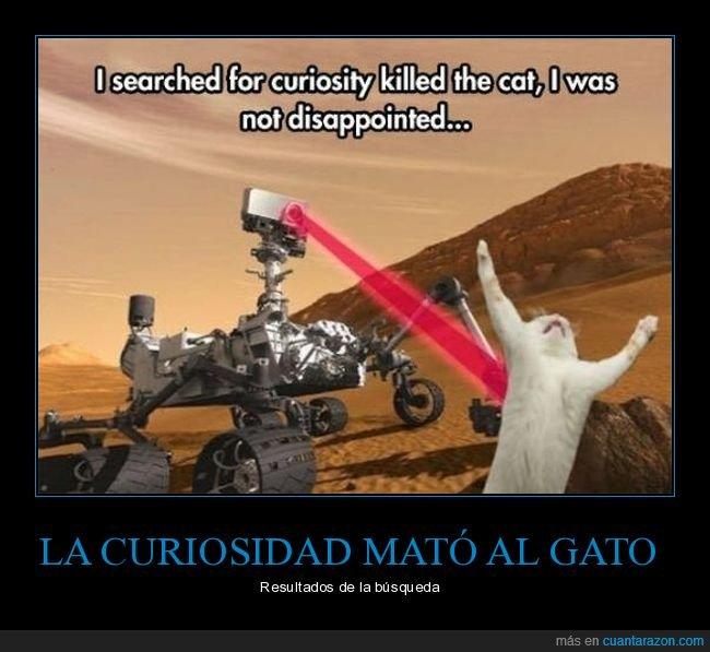 absurdo,curiosidad,curiosity,gato,matar