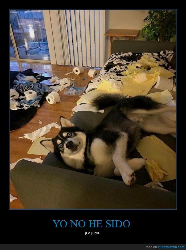 papel higiénico,perros
