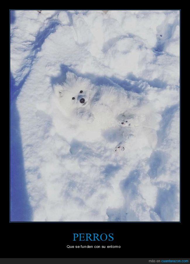 camuflaje,nieve,perros