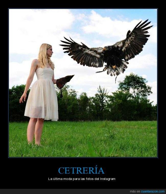 águila,cetrería