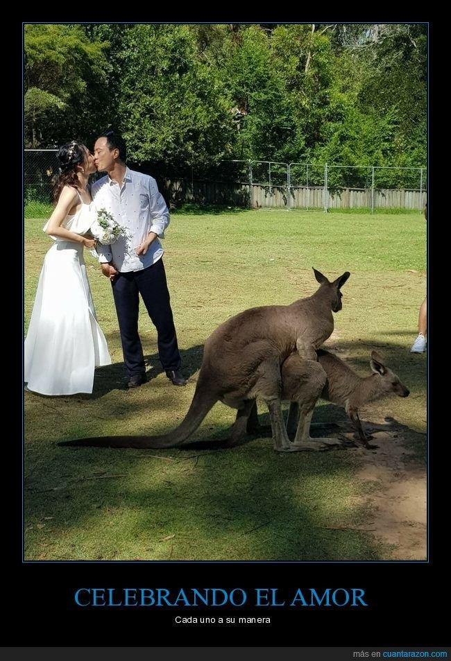 boda,canguros,fail