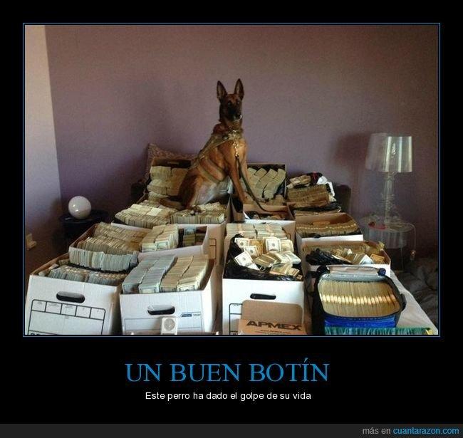 dinero,perros