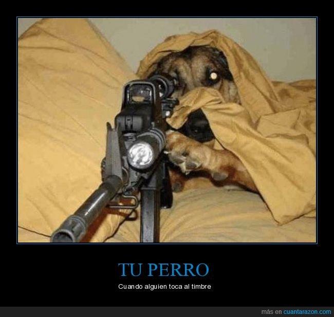 francotirador,perros,timbre