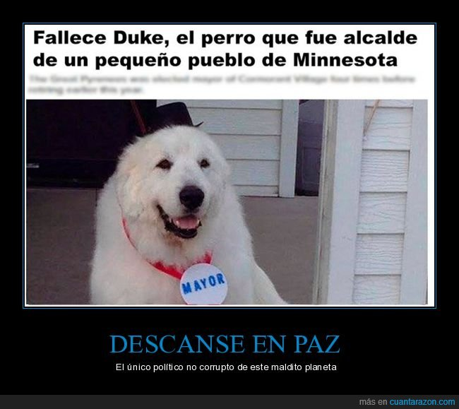 alcalde,dep,duke,minnesota,muerte,perro,políticos