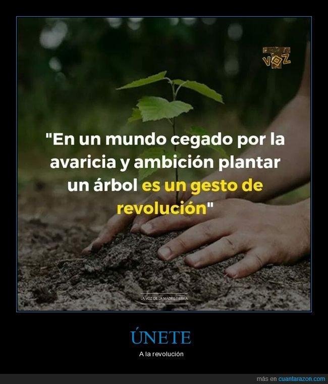 ambición,árbol,avaricia,revolución