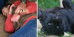 Enlace a Ella quería hacerse un selfie con un jaguar del zoo, pero él prefirió darle un autógrafo