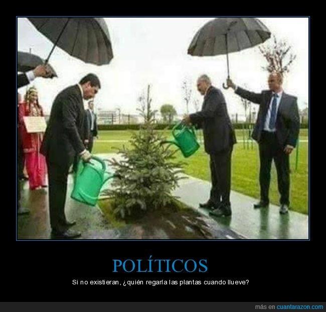 existir,llover,plantas,políticos,regar
