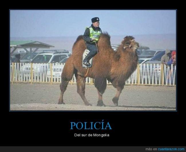 camello,mongolia,policía