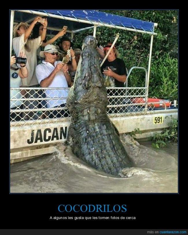 barco,cocodrilo,fotos,wtf