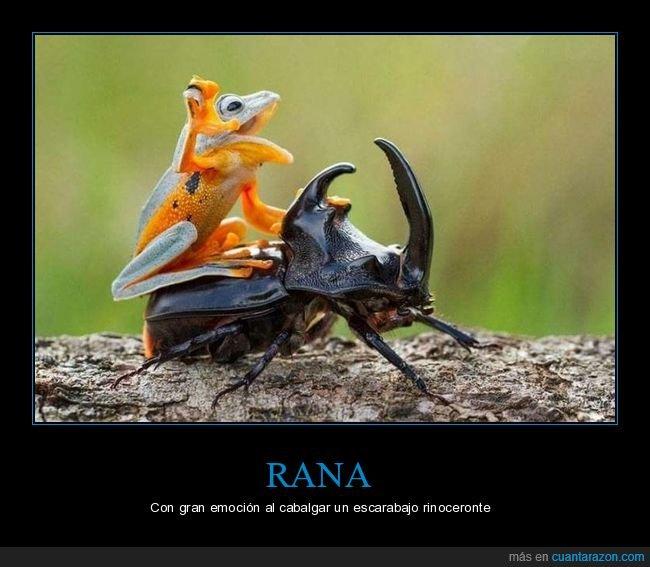 cabalgando,emoción,escarabajo rinoceronte,rana