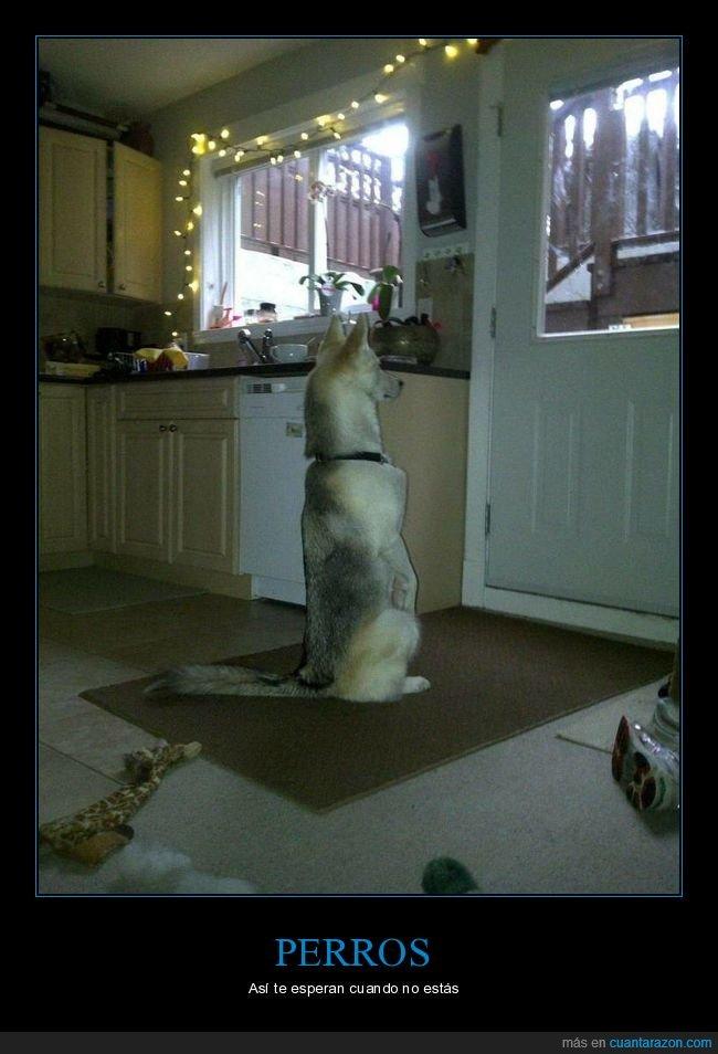 esperando,perros,puerta,sentado