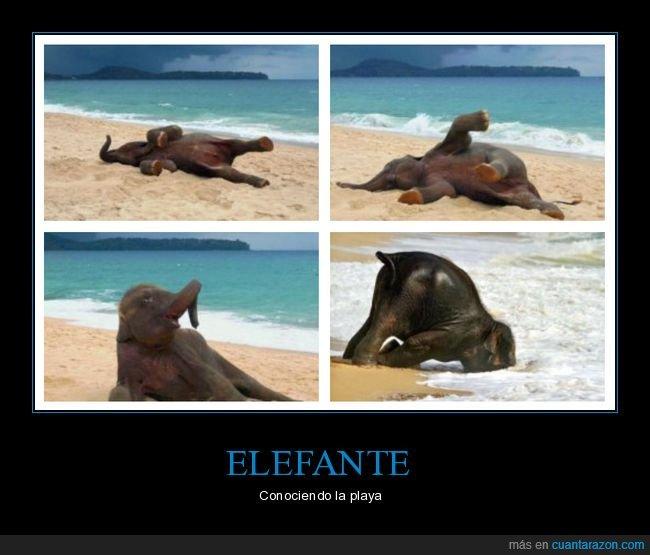 elefante,playa,wtf