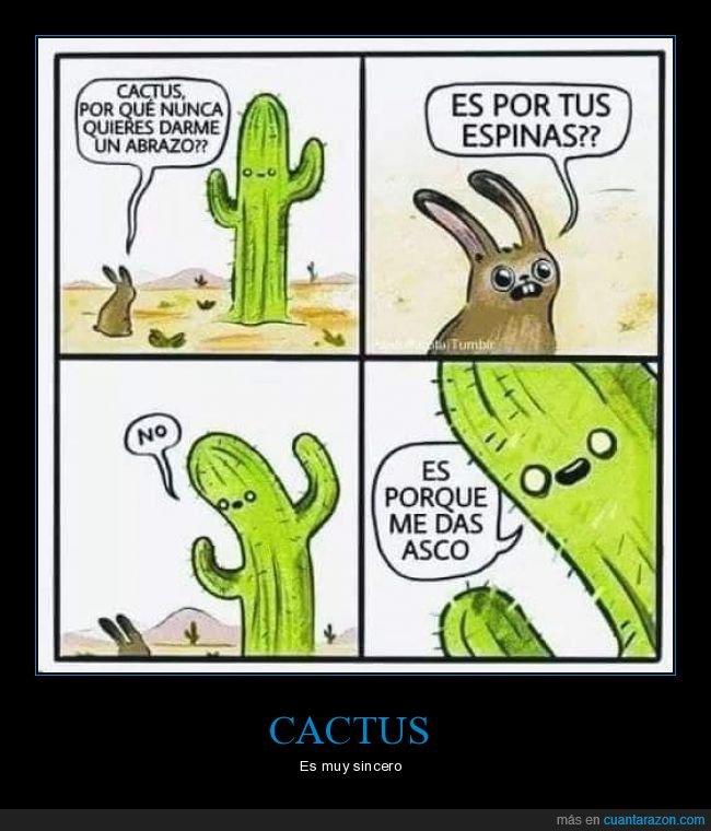 abrazar,asco,cactus,conejo,espinas
