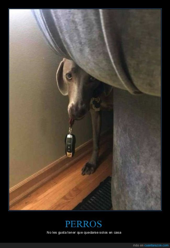 coche,llaves,perros