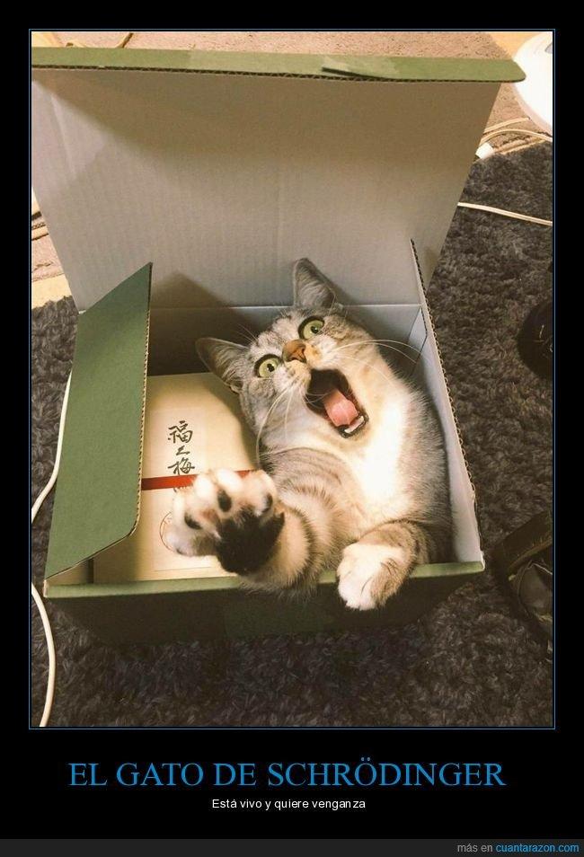 caja,gato,schrödinger