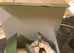 Enlace a Parece que no le gustó el experimento de la caja