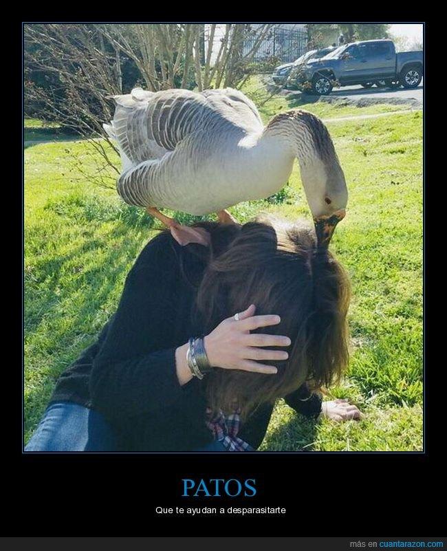 cabeza,pato,pelo