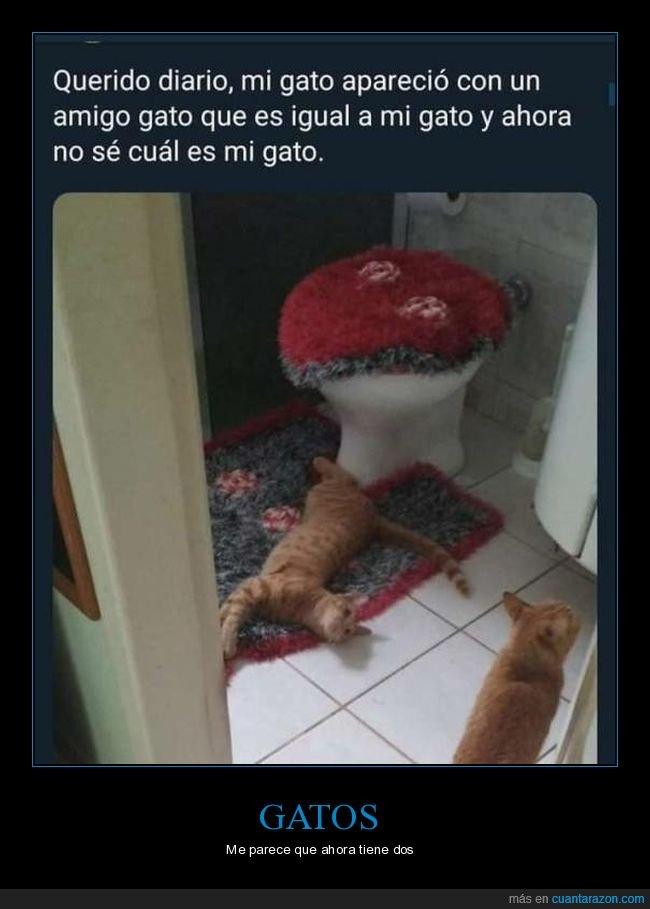 amigo,gatos,igual,wtf