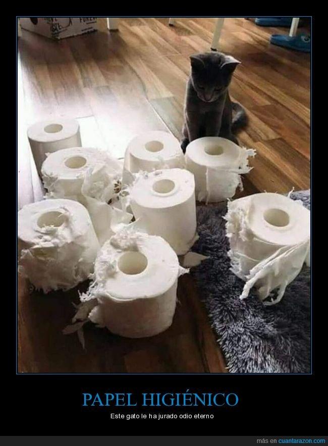 gatos,papel higiénico,rotos
